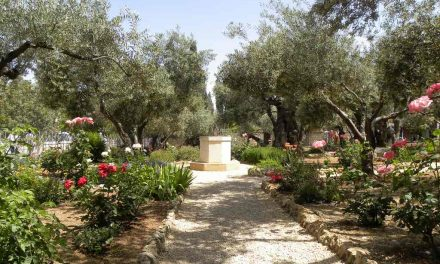 Israel Wine Tour and Culinary Tours