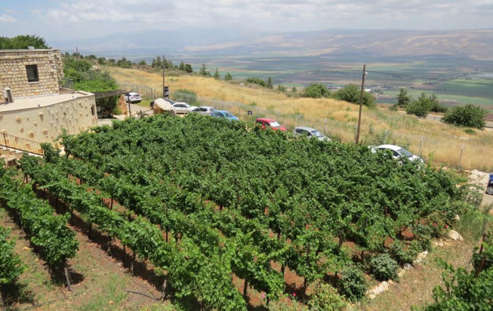 Vineyards overlooking the upper Galilee