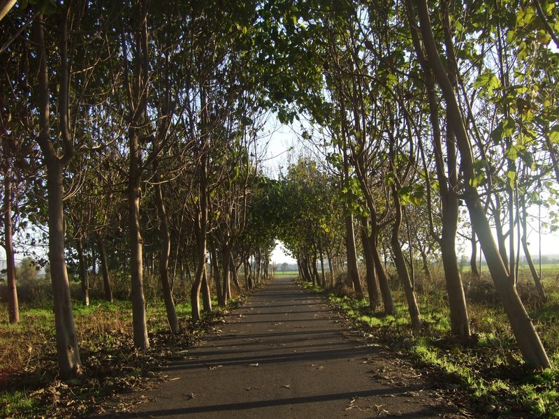 A canopy of trees over the paved bike path